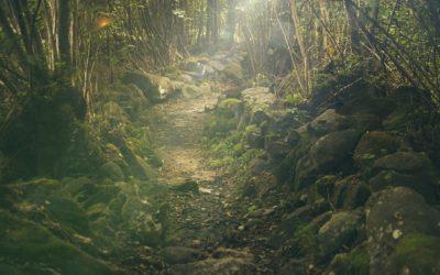 Reise in deinen inneren Garten